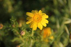 Весна пришла на Кипр
