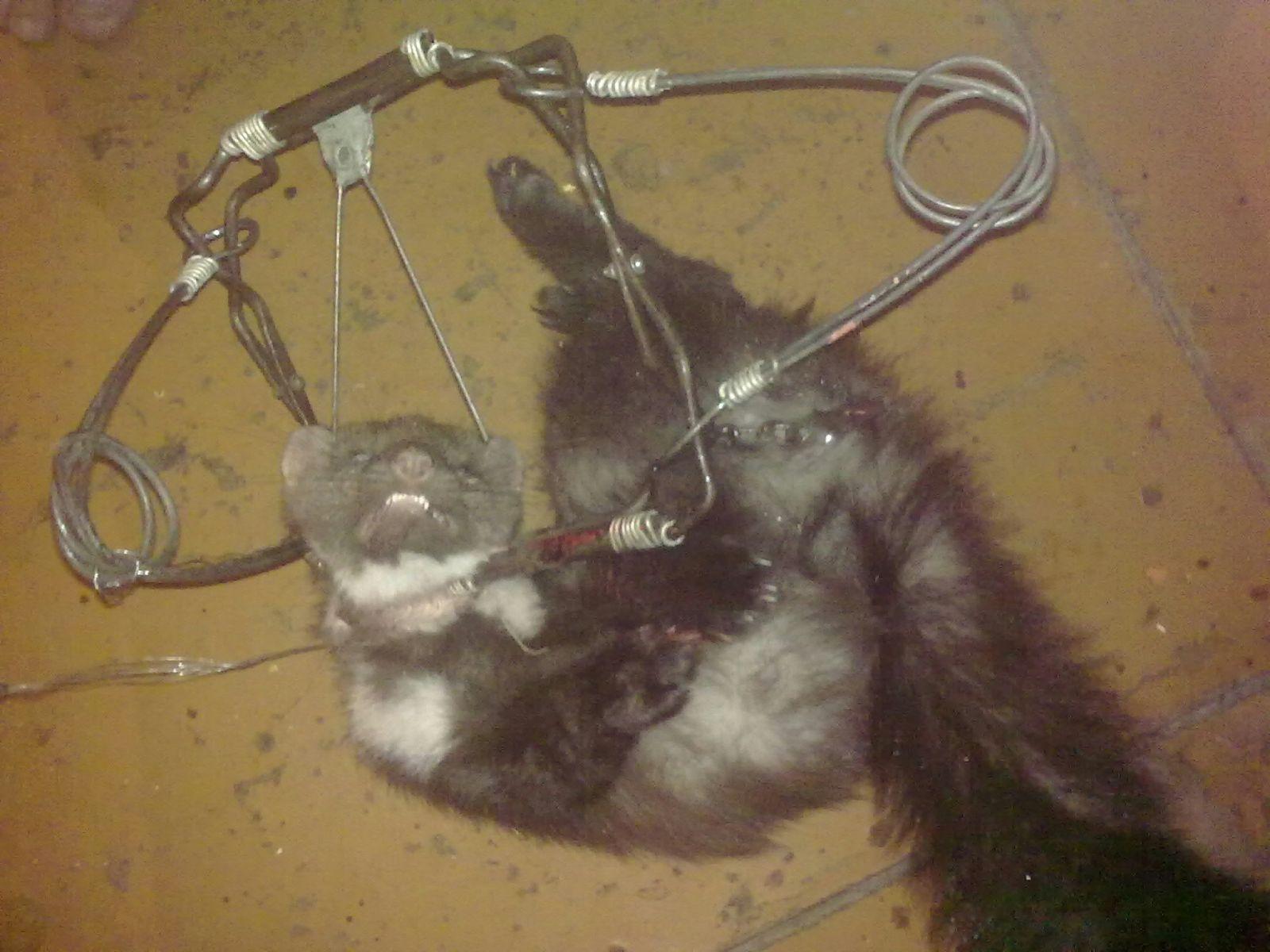 Капкан своими руками на кошку
