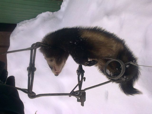 фото охоты