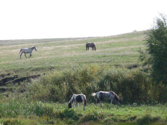 Ходют кони над рекою...