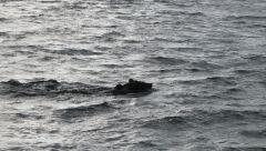 мишутка в заплыве