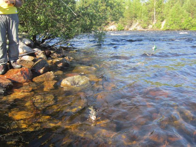 река сегежа рыбалка в июле способы заработка