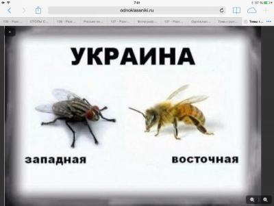 Прикрепленное изображение: image.jpg