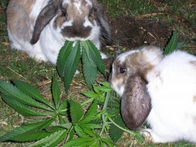 Прикрепленное изображение: bunnies.jpg