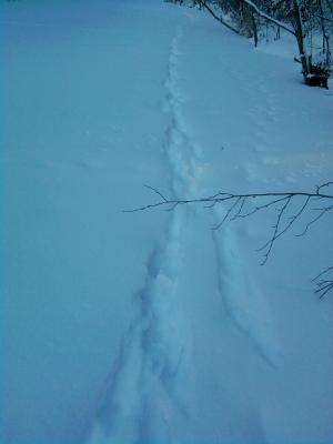 Прикрепленное изображение: собаки тропа.jpg