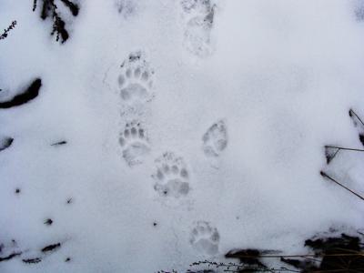 Прикрепленное изображение: барсука,лисицы.jpg