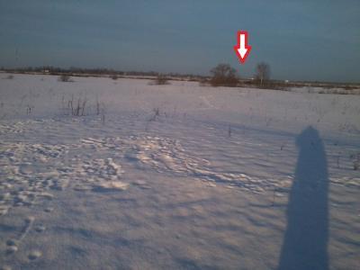 Прикрепленное изображение: На лису 1.jpg