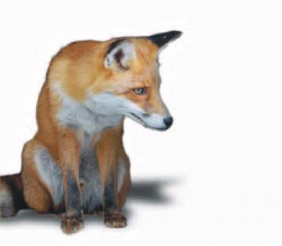 Прикрепленное изображение: fox23.jpg