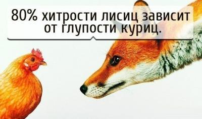 Прикрепленное изображение: fzkuJxovips.jpg