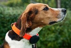 Прикрепленное изображение: Трекер на собаке - 3.jpg