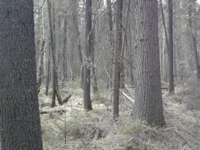 Прикрепленное изображение: лес хрен пройдешь.jpg