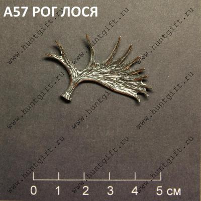 Прикрепленное изображение: А57 Рог лося.JPG