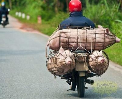 Прикрепленное изображение: свиньи-живность-транспортировка-1243288.jpeg
