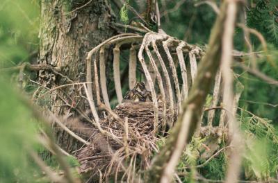 Прикрепленное изображение: гнездо-729345.jpeg