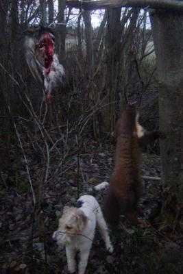 Прикрепленное изображение: У барсучьей норы у Березников 4.11.11г..JPG