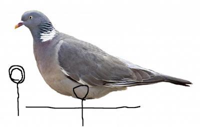 Прикрепленное изображение: профиль вяхиря крепление.JPG