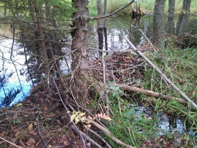 Прикрепленное изображение: Плотина на Кожиной 1.jpg