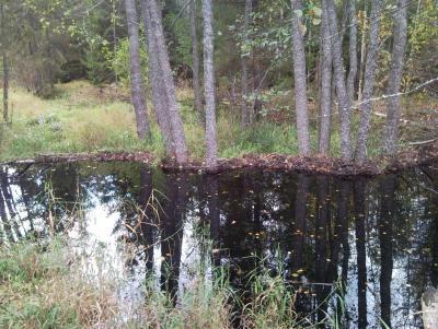Прикрепленное изображение: Плотина 7.jpg