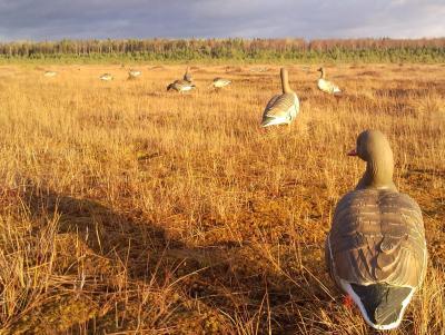 Прикрепленное изображение: Гринхеды на болоте 2.jpg