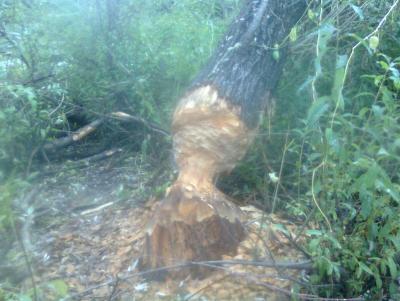 Прикрепленное изображение: Фото0144.jpg