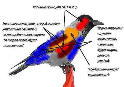 Прикрепленное изображение: Crow zone.jpg