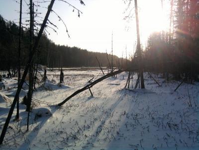 Прикрепленное изображение: лес1.jpg