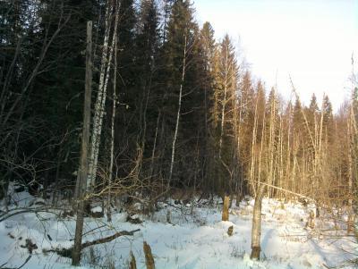 Прикрепленное изображение: лес3.jpg