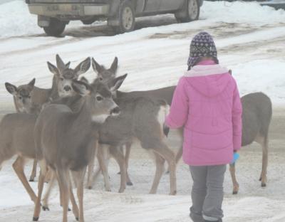Прикрепленное изображение: Deer_feeding.JPG