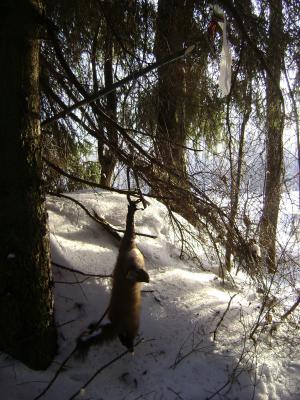Прикрепленное изображение: 23.12.12г.у Летяшкина угол у канавы.JPG