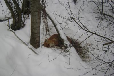 Прикрепленное изображение: 23.02.12г.у Потыпинского п-да.JPG