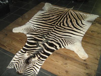Прикрепленное изображение: зебра.JPG